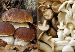Porcini e funghi misti