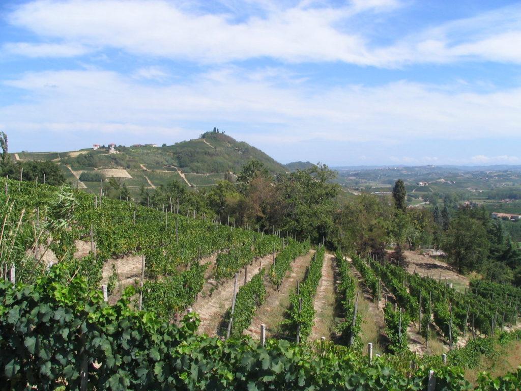 Immagine di vitigni di Moscato a Costigliole