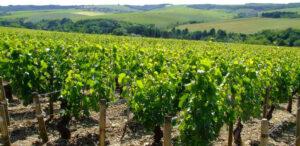 Immagine della Borgogna