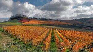 Immagine di colline Nebbiolo e Barolo