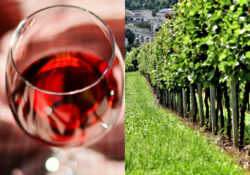 Immagine in evidenza Terroir vino