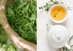 Immagine di tè
