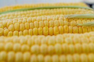 Immagine di pannocchie di mais