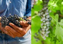 Immagine vini siciliani