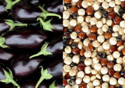 Immagine melanzane nere e quinoa