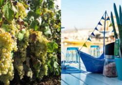 Immagine di vini Mediterraneo