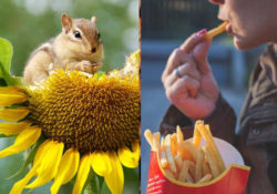 Immagine animali che si nutrono