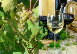 Immagine di vitigno e vino Malvasia
